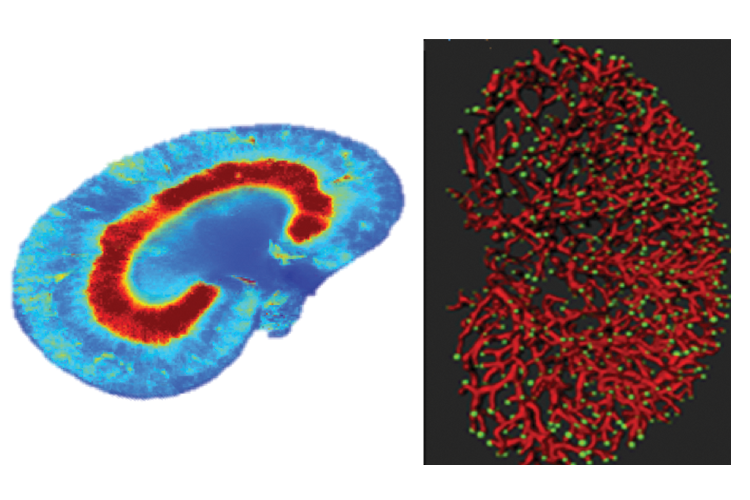 Two examples of fluorescent imaging