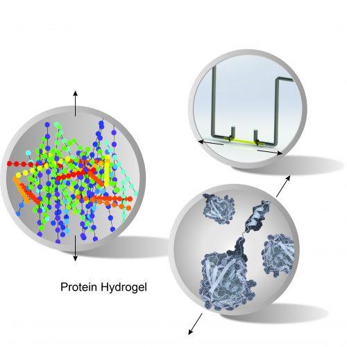 Protein Hydrogel