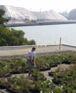 Green Roof at WATER Institute