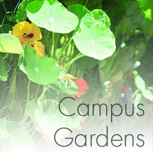 campusgardenssquare