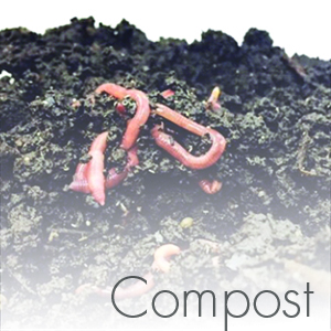 compostsquare